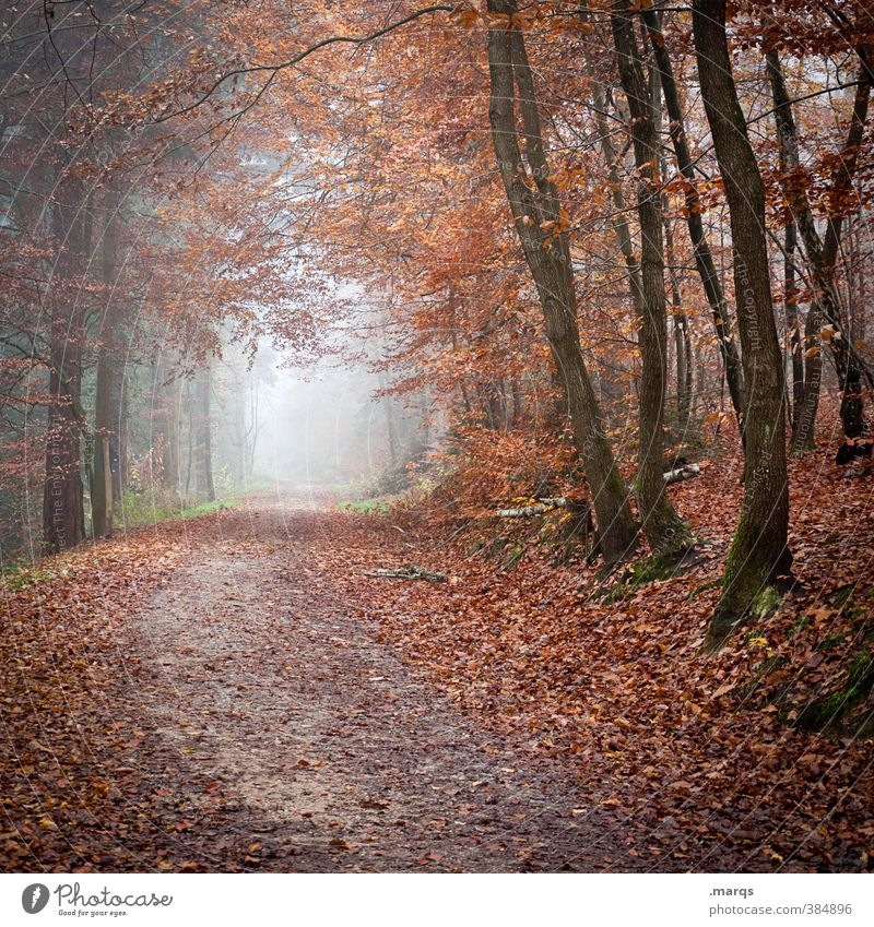 In autumn Trip Adventure Environment Nature Landscape Autumn Fog Tree Forest Lanes & trails Cold Moody Life Transience Change Future Deciduous forest