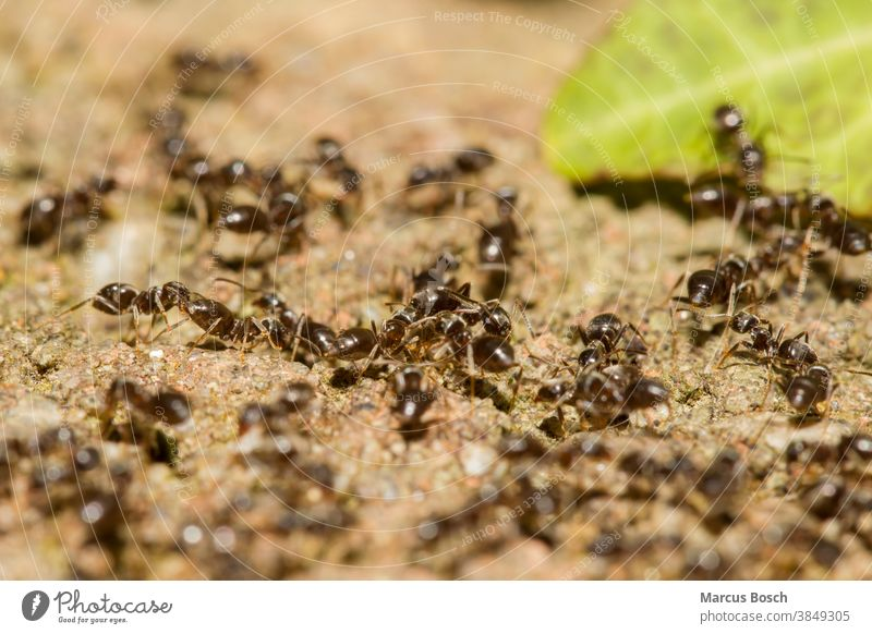 Ants, Formicidae, Ants ant colony Insect ants Hymenoptera insects people