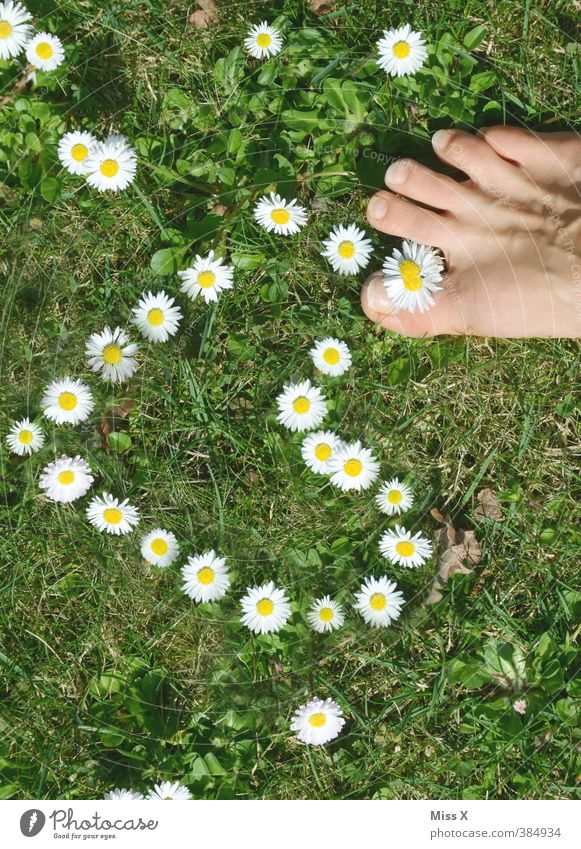 trample love underfoot Personal hygiene Pedicure Human being Feet Flower Meadow Blossoming Fragrance Emotions Moody Spring fever Love Infatuation Romance Daisy