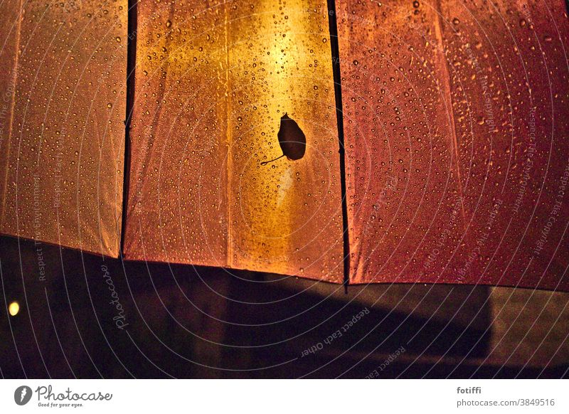 All alone here? Leaf Rain Drops of water Water Autumn Close-up Wet rainy Illuminate Stick