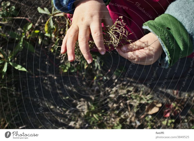 Gently Child Plant Comprehend feel Garden Experience Toddler Exterior shot Hand Study Nature Parenting Environment Discover