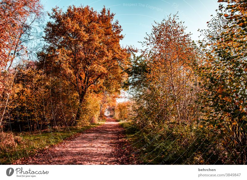 autumn love Sunlight Contrast Light Exterior shot Colour photo Footpath pretty Fantastic Forest Bushes Leaf Tree Plant Autumn Landscape Nature Environment