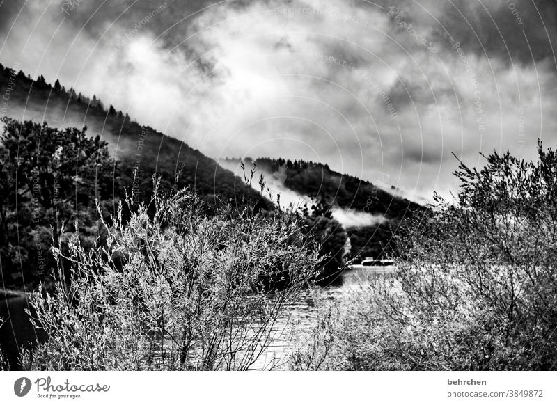 cloud forest melancholically melancholy Impressive Dark Dramatic Vacation & Travel Forest Black & white photo Hiking Nature Exterior shot Environment Clouds Sky
