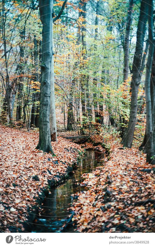 Brook run in Brandenburg Landscape Trip Nature Environment Hiking Sightseeing Plant Autumn Beautiful weather Tree Forest Acceptance Trust Belief Autumn leaves