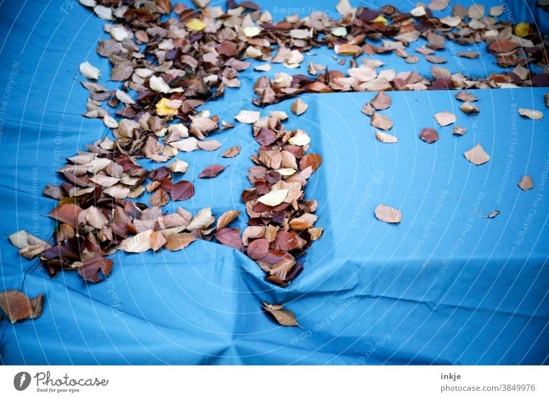 Autumn leaves on covered seating area Colour photo Exterior shot Close-up foliage Packing film Blue Brown autumn mood Deserted Nature Autumnal Early fall
