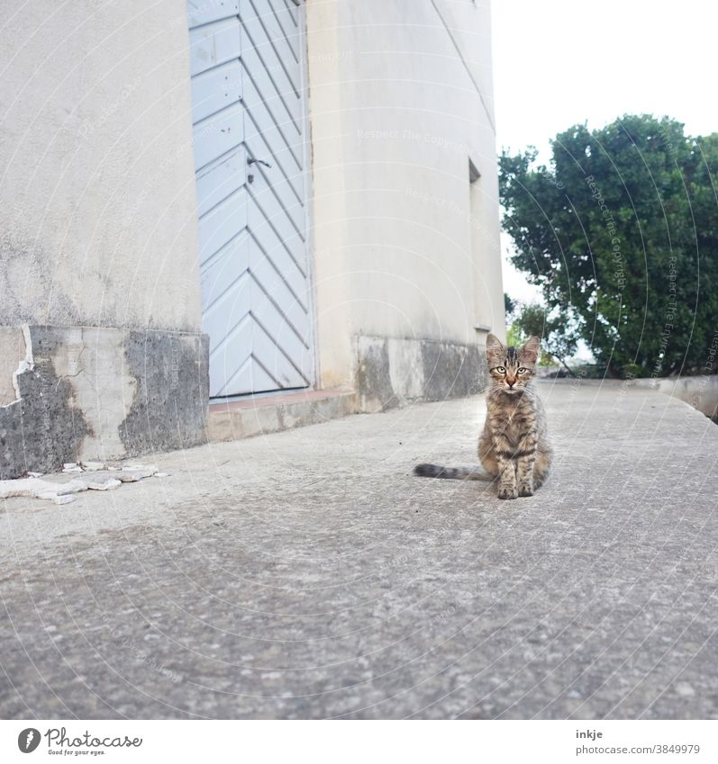 Street cat in Corsica Colour photo Exterior shot Cat Free-living Crouch Sit Deserted Cute youthful Small house wall Prowl Animal Animal portrait Observe