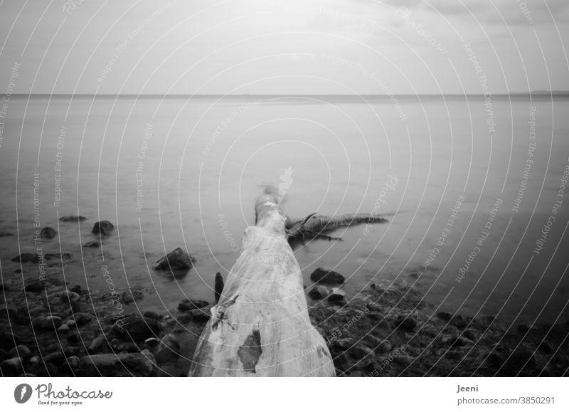 A fallen tree trunk in the sea - foggy veil lies over the water Ocean Baltic Sea Baltic coast Tree trunk Topple over stones Stone Water steep coast Beach