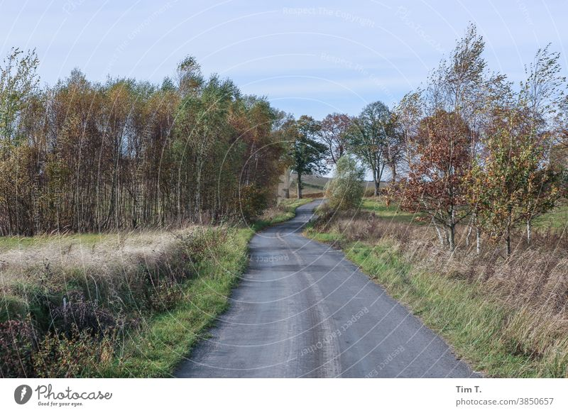 a small street in Poland . It's autumn... poland Autumn Street Lanes & trails Leaf Tree Exterior shot Forest Deserted Colour photo Environment Autumnal