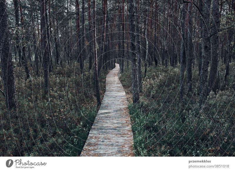 Wooden path leading through the swamp and forest in a natural park day woods tree explore foliage environment outdoors travel green background nature