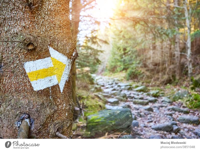 Hiking trail marker on a tree in mountain forest. marking hike Poland nature path direction adventure sign outdoor orientation tourism recreation route paint