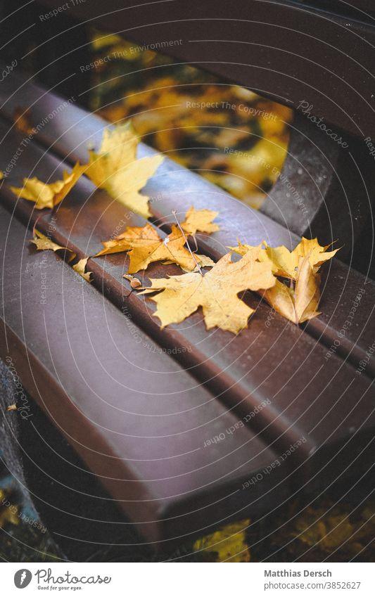 Autumn bench Autumnal Autumn leaves Autumnal colours Sense of Autumn Bench foliage