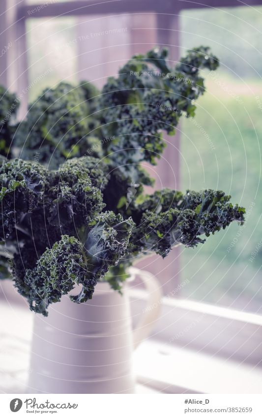 Kale leaves in vintage pot in front of country house window background brassica cabbage closeup cultivation curly detox diet Edible kale farm food frame fresh