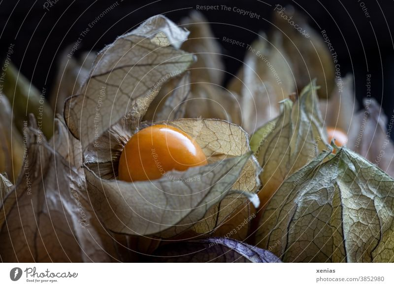 The fruit physalis with sepals Physalis Andean berry Fruit Chinese lantern flower Orange Detail Exotic Structures and shapes Cape gooseberry Nutrition
