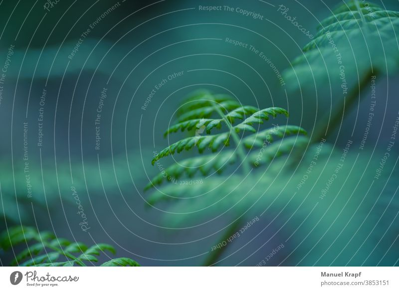 fern Fern afar Nature nature Green green Plant schedules macro Macro (Extreme close-up) bokeh
