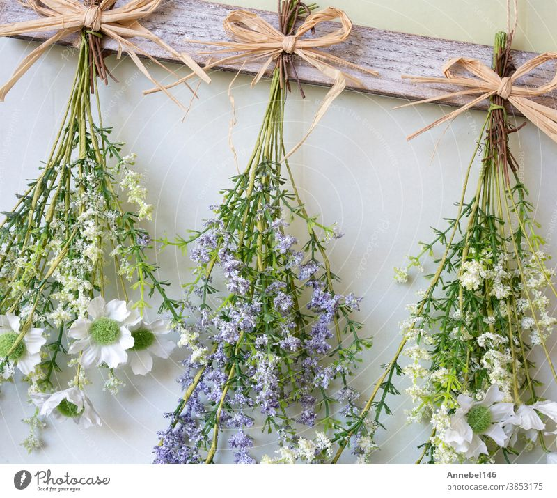 Various bright bouquet of dried flowers hanging on rope against wooden background, making dried flowers modern decoration for home interior nature beautiful dry