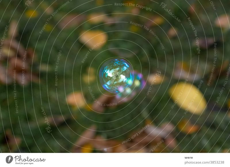 iridescent soap bubble over a meadow bubbles burst childhood foam fragile perishable play playing shimmer soap bubbles soft toy wet