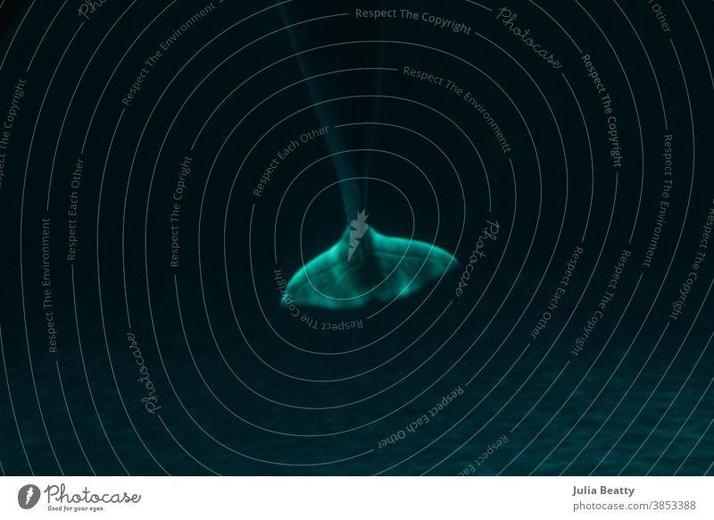 Whale tail under water in aquarium; moody turquoise lighting underwater sea shark ocean blue animal marine reef nature aquatic scuba swimming tropical diving