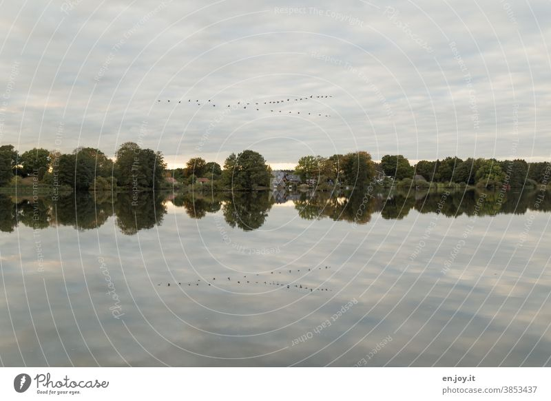 Flock of birds in the sky reflected in the lake Lake Lakeside Sky Clouds reflection bank trees bird migration Reflection Calm Landscape Idyll Water