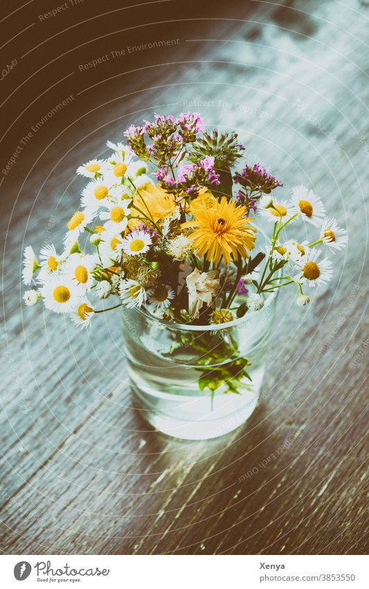 Flowers in a jar Bouquet Glass Daisy meadow flowers Table Blossom Spring Vase Colour photo Blossoming Decoration Plant Nature Deserted Day