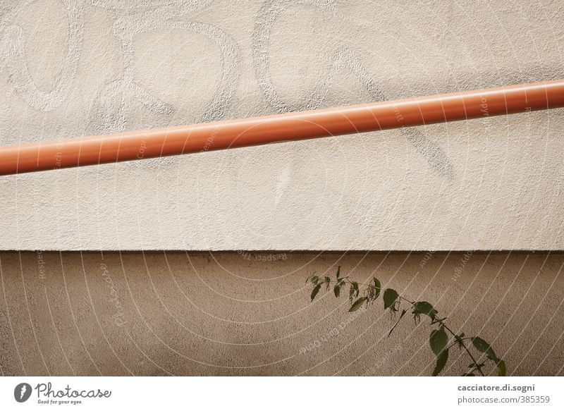 oblique - straight - curved Plant Wild plant stinging nettle Wall (barrier) Wall (building) Facade Pipe Line Simple Long Gloomy Town Brown Orange Modest Thrifty