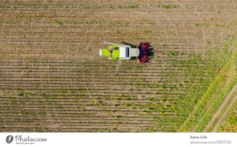 Above view on combine, harvester machine, harvest ripe sunflower Agricultural Agriculture Agronomy Cereal Combine Country Crop Cultivated Cultivation Cut Dry