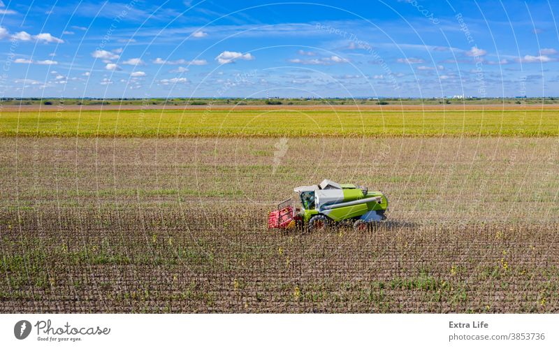 Aerial view of combine, harvester machine harvest ripe sunflower Above Agricultural Agriculture Agronomy Cereal Combine Country Crop Cultivated Cultivation Cut