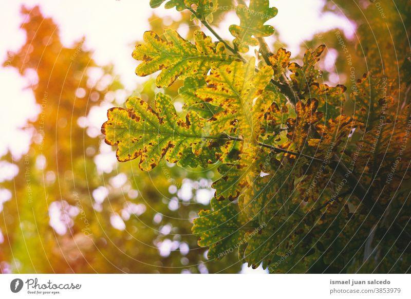 autumn leaves and sunlight in autumn season, autumn colors green green color green leaves brown brown color brown leaves orange color nature foliage Autumn