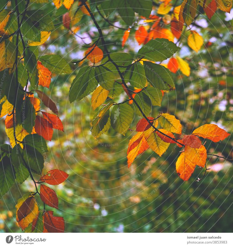 autumn leaves in the nature in autumn season, autumn colors leaf Multicoloured yellow yellow leaves brown brown leaves green green leaves forest mountain