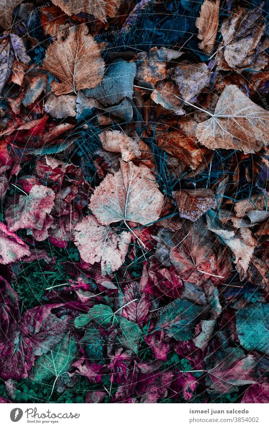 multi colored leaves on the ground, autumn leaves and autumn colors leaf brown orange multicolored colorful dry background nature natural outdoors texture
