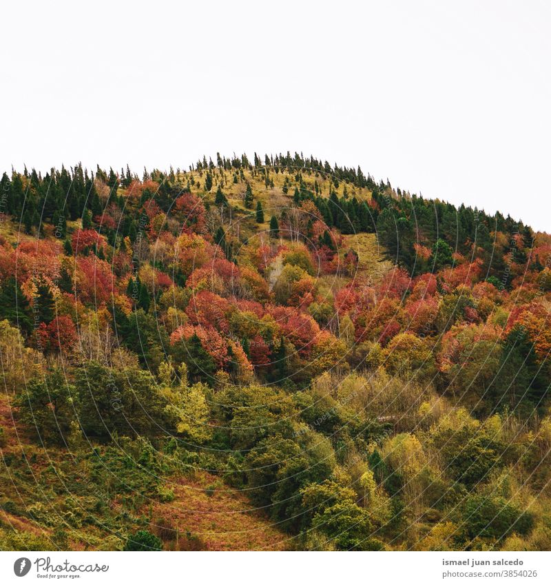 autumn colors in the mountain in autumn season, Bilbao, Spain trees forest nature landscape outdoors view hill travel place destination tranquility serenity