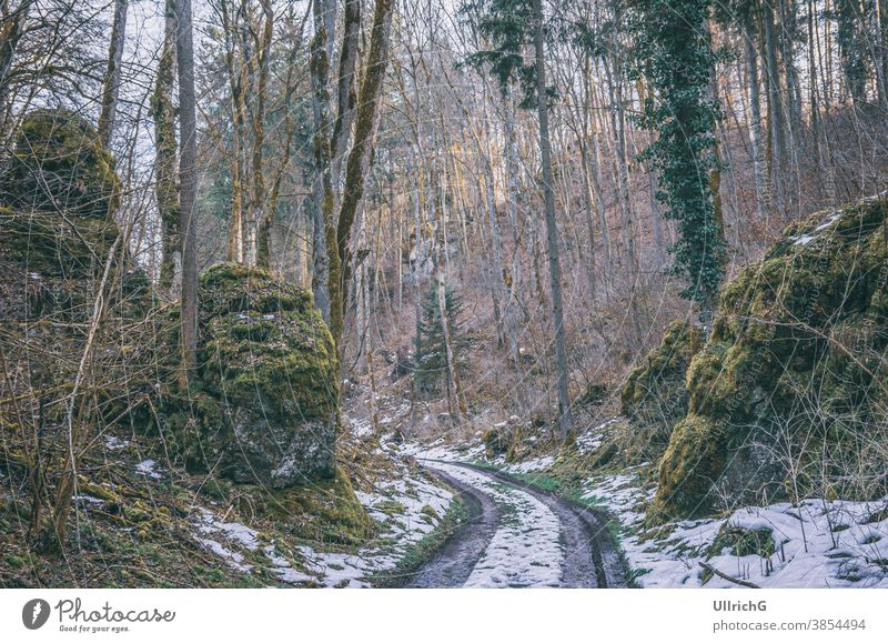 Forest path with residual snow - Forest path with residual snow in spring. way track dirt road forest sunken road sunken path hollow way lane landscape nature