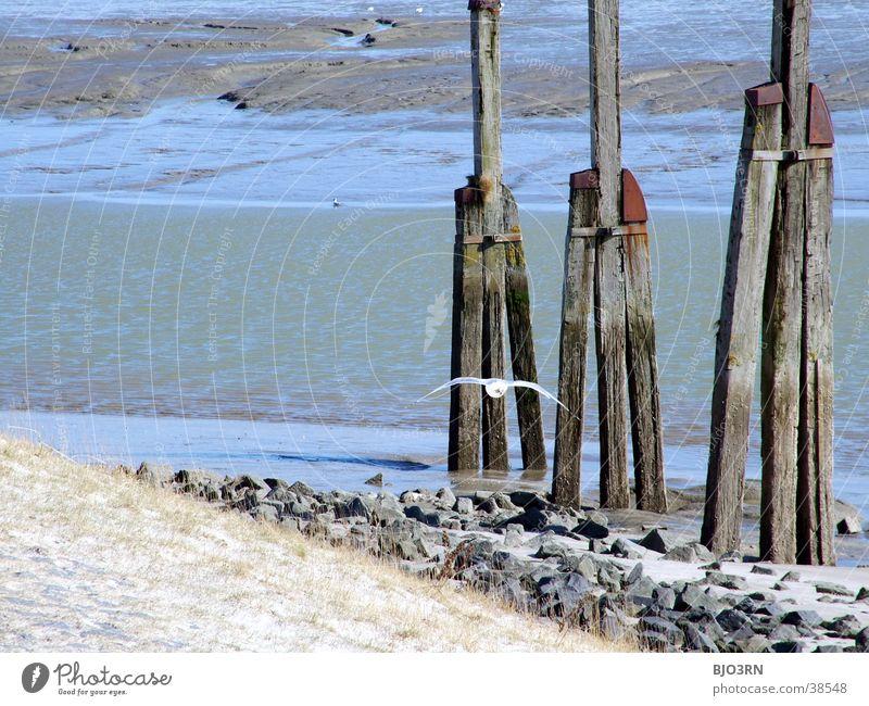 Water Old Ocean Beach Animal Grass Freedom Wood Stone Lake Sand Bird Waves Harbour Beach dune Seagull