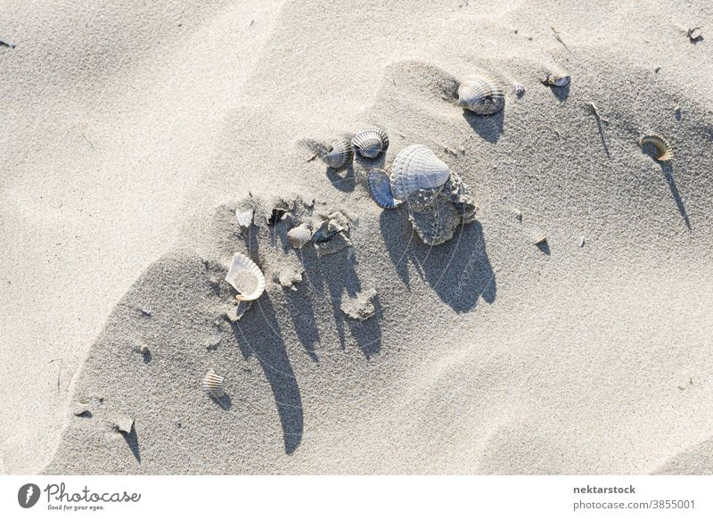 Seashells on White Sand seashell sand white sunny clam dune abstract Langeoog still life Germany high angle view grain background textures uneven beach
