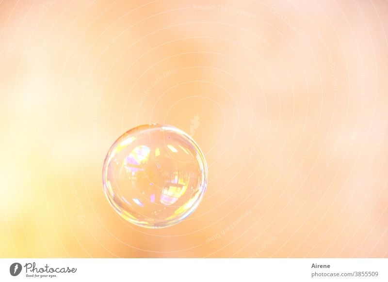 Dream - Wish - Hope... Soap bubble Air bubble Flying Dazzling Easy Glittering Ease Colour Fragile Round Sphere Bubble Esthetic Light (Natural Phenomenon)