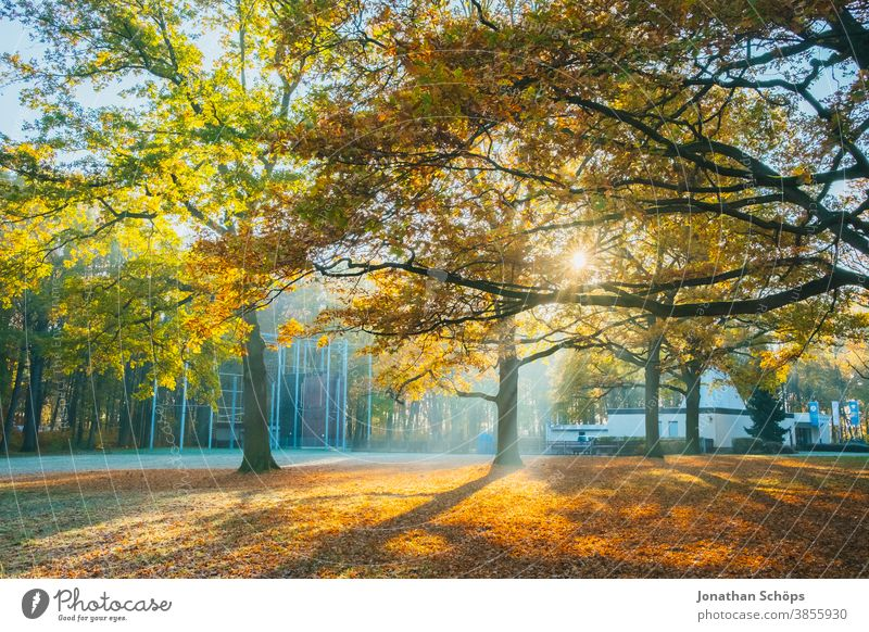 Beautiful trees on a meadow in the woods with sun and frost Chemnitz Germany Kosmonautenzentrum Sigmund Jähn Küchwald November autumn background autumn colors