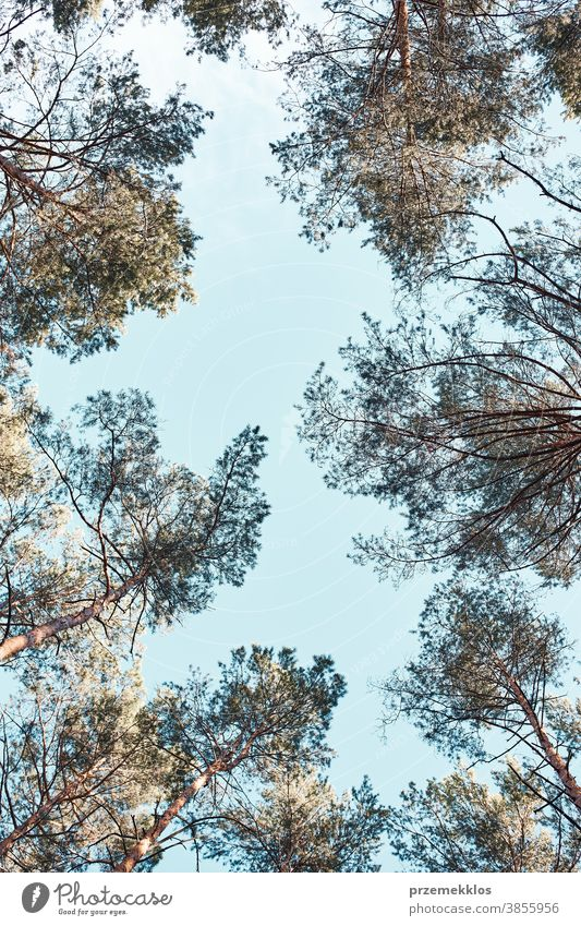 Top of the trees over blue sky view from ground background beauty branch copy space ecology environment foliage forest green grow growth natural nature