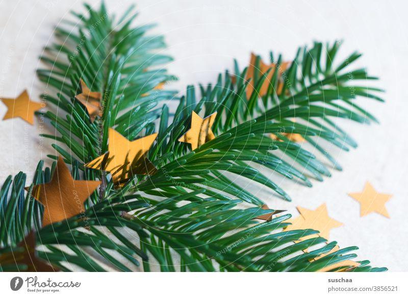 fir branch with stars Fir tree Fir branch fir needles fir tree Fragrance Christmas & Advent Decoration Christmas tree Winter Green Tradition