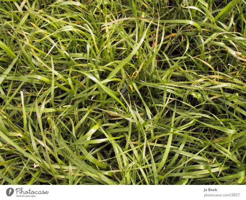 Green Meadow Grass