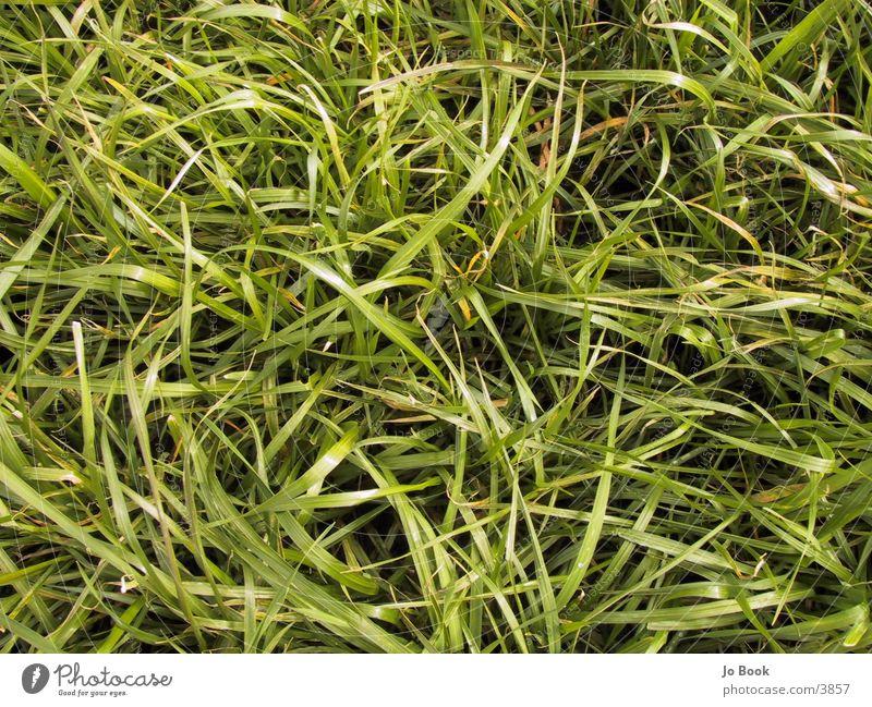 Green Meadow Grass