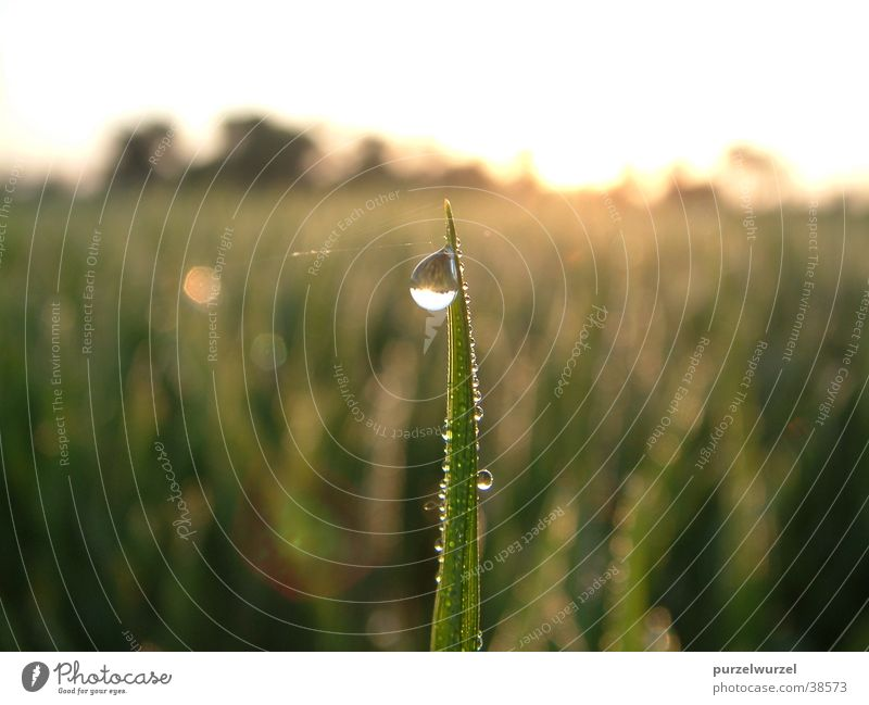 morning dew India Dew Cold Rice expected heat Harvest