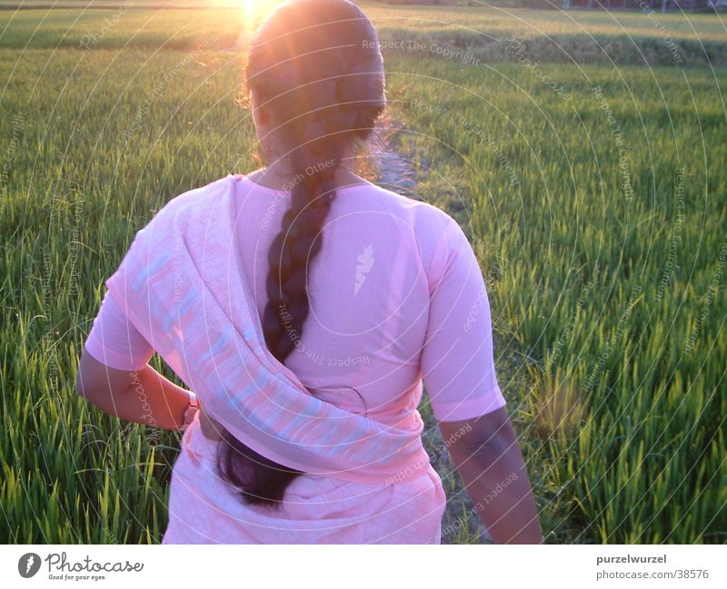 Before harvest India Sunrise Working man Tea plantation Physics start of work Warmth