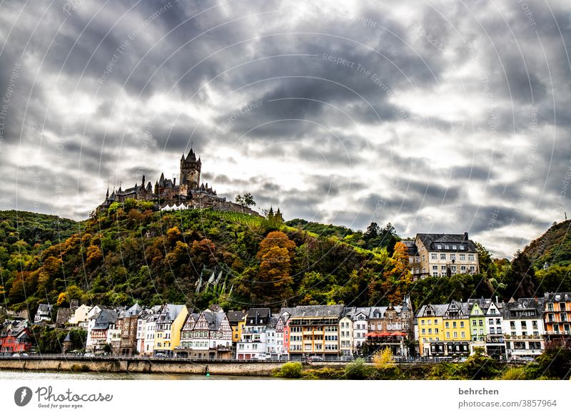 imperial castle Autumnal Seasons Rain Hunsrück Moselle valley Mosel (wine-growing area) River bank Rhineland-Palatinate Wine growing tranquillity Idyll vine