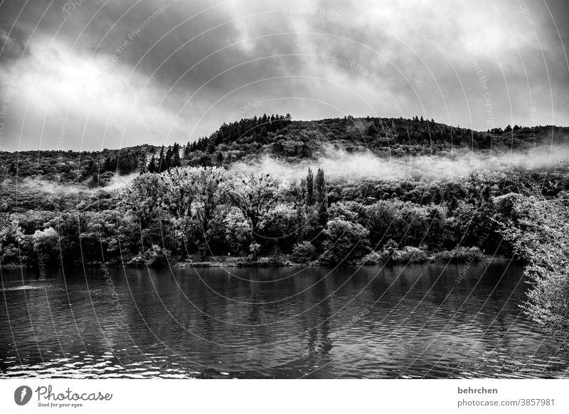 silent Vineyard Seasons Autumnal Rain Hunsrück tranquillity Moselle valley Mosel (wine-growing area) River bank Rhineland-Palatinate Idyll Trip Exterior shot