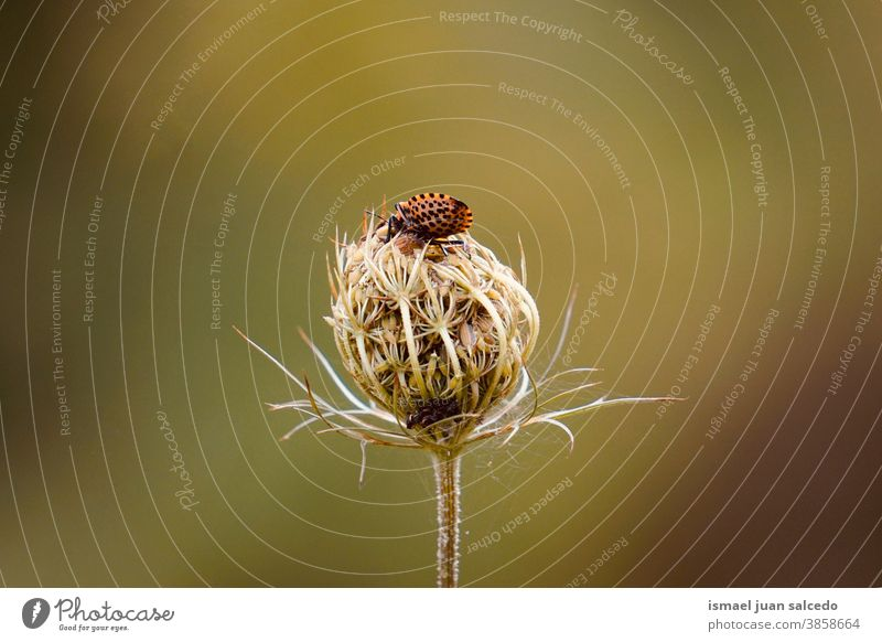 bug on the green flower in the nature in autumn season plant garden floral decorative decoration romantic beauty freshness fragility background fall Autumnal