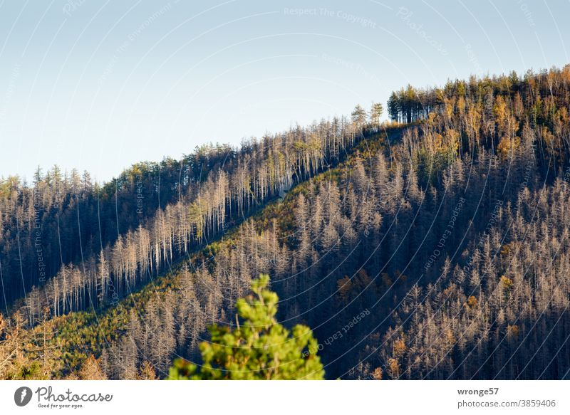 View of a slope in the Ilse valley with strips of dying spruce and strips of already afforested forest Landscape Harz Ilsetal Forest spruces dead Bark-beetle
