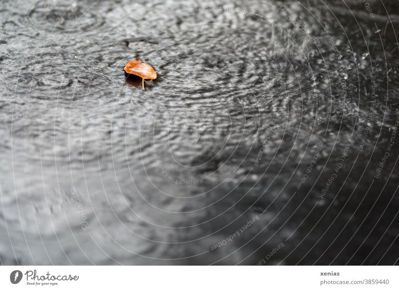 an autumn leaf lies in the rain Autumn Leaf Rain Drop Nature Weather Climate raindrops circles Wet Seasons xenias