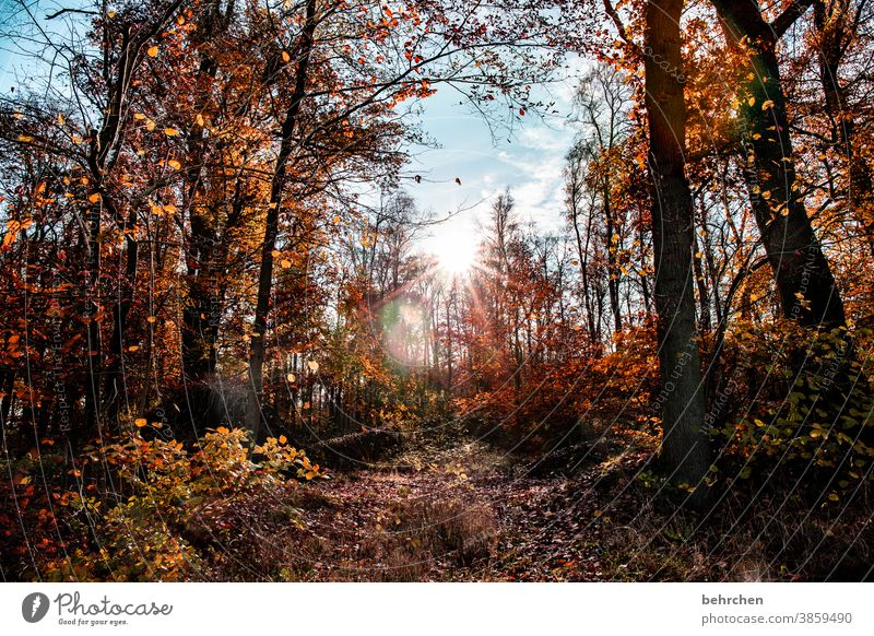autumn colours Automn wood Sunbeam Idyll Blue sky Sky autumn walk Autumnal colours autumn mood Seasons Autumn leaves Calm Beautiful weather Deserted Environment