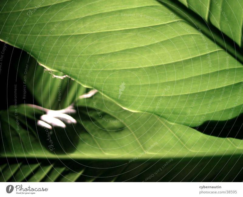 leaf infestation Leaf Green Underside of a leaf Structures and shapes leaf grain