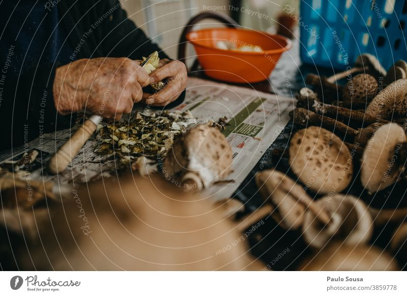 Senior woman preparing mushrooms Edible edible mushroom Preparation Food Mushroom Colour photo Autumn Nature Delicious Exterior shot Forest Environment