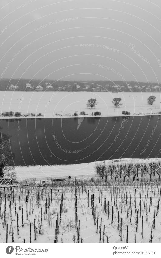 Vineyard on the Elbe in Dresden with snow Snow Dark Winter December January chill Cold Gray Water Black & white photo Snowfall snowflakes White Climate change